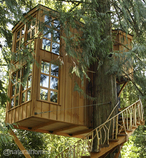 A Treehouse Village And Nature Conservancy In Issaquah Usa
