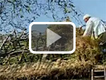 Bracken Thatching